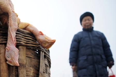 China: Das Gesundheitsministerium warnt vor Vogelgrippe