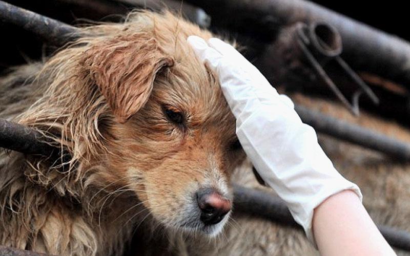 11 Tonnen Hundefleisch: So brutal ist Chinas Hunde-Mafia