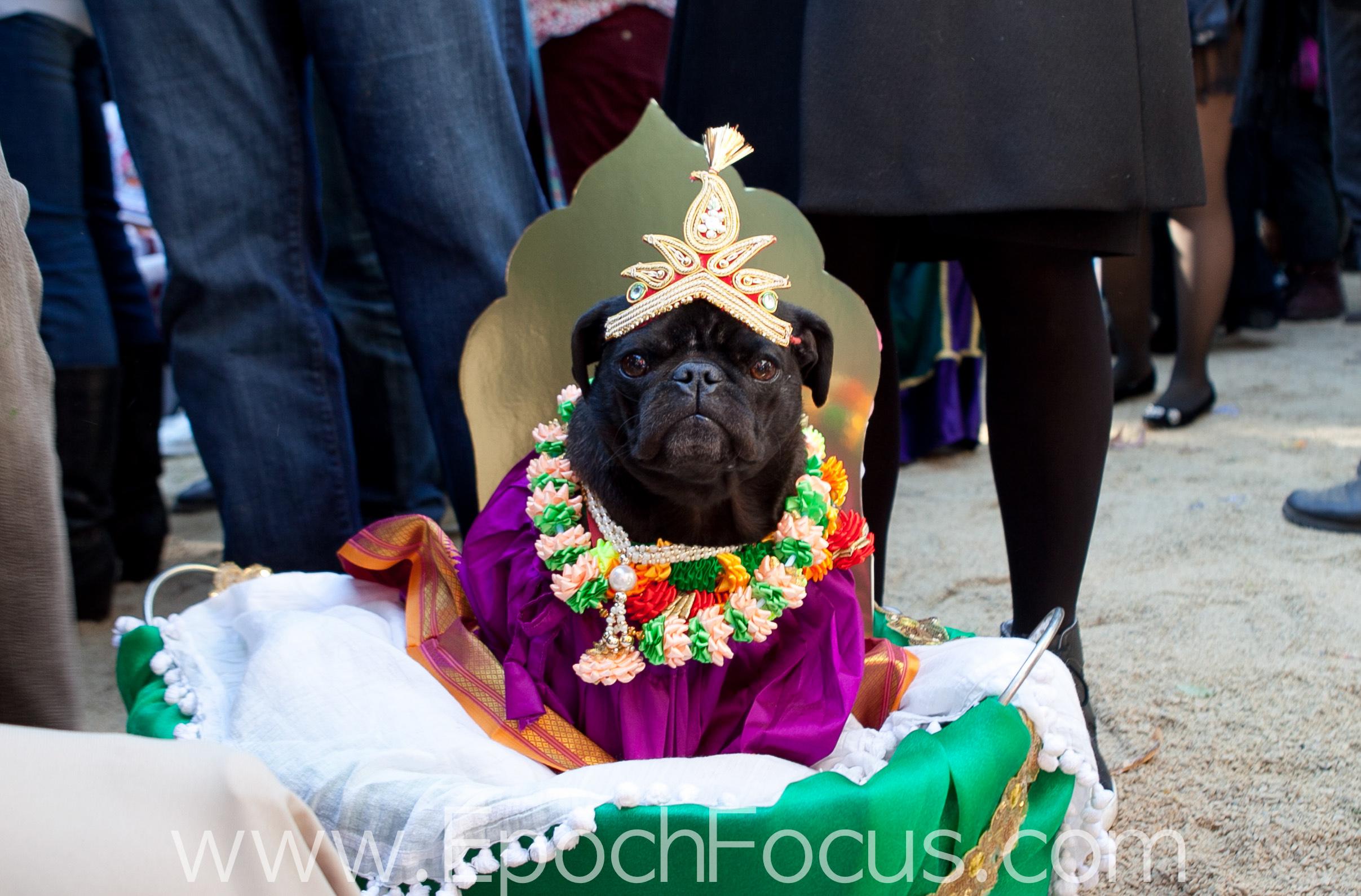 Halloween: Die 100 verrücktesten Hunde-Fotos aus New York