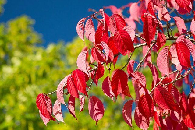 Leuchtendes Herbstlaub  Foto: BEJAN Design