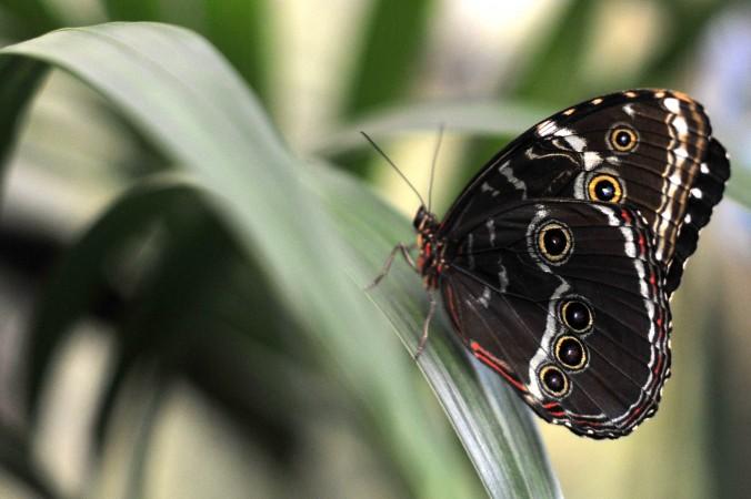 Chinesische Redewendung: Zhuang Zhou träumt einen Schmetterling 莊周夢蝶