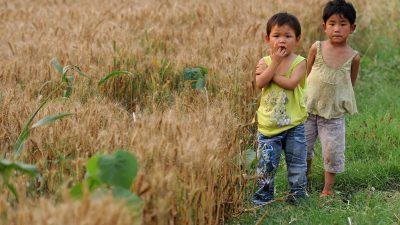 Chinas Staatschef warnt vor Getreidemangel