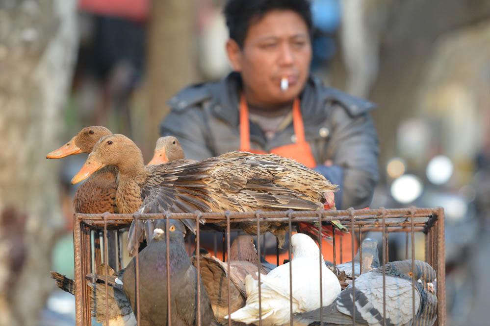 Über 100 Vogelgrippe-Fälle in China seit Jahresanfang