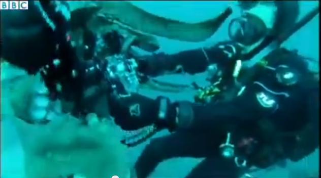 Krake versucht, Taucher die Filmkamera zu klauen (+Video)