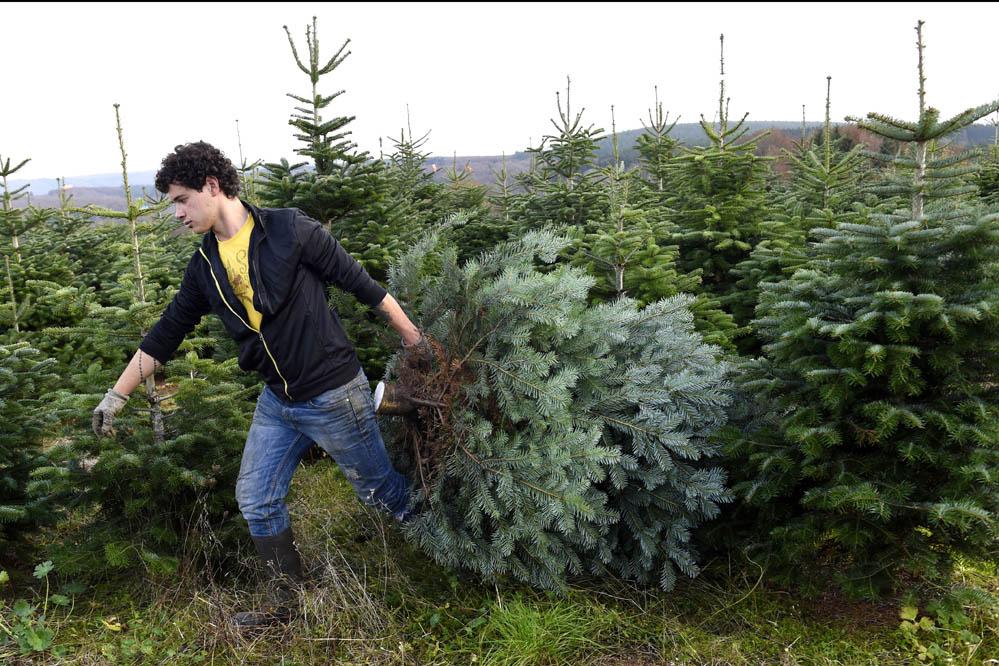 Weihnachtsbaum kaufen: Schon 1938 war das der reinste Stress!