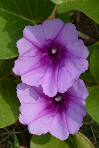 Tropische Flora auf Koh Mak
