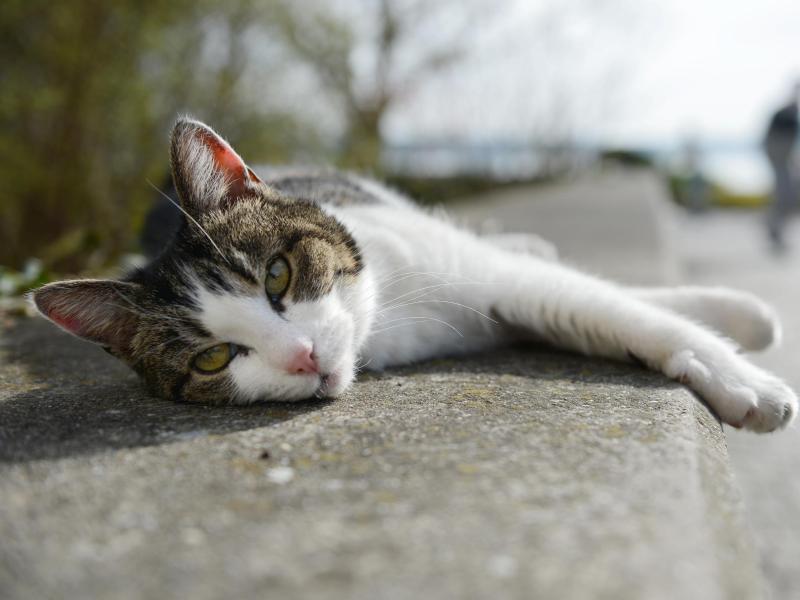 Katzenvideos als Treibstoff des Internets? Nicht mit diesem flauschigen Vierbeiner!