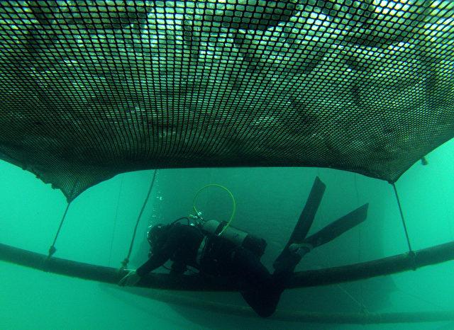 Kein Entkommen - Aus diesen engmaschigen Netzen können unbrauchbare Jungfische nicht entfliehen. Sie werden meistens bereits tot massenhaft als Müll zurück ins Meer entsorgt. Es gibt allerdings bereits Fischer die Netze mit größeren Maschen benutzen.