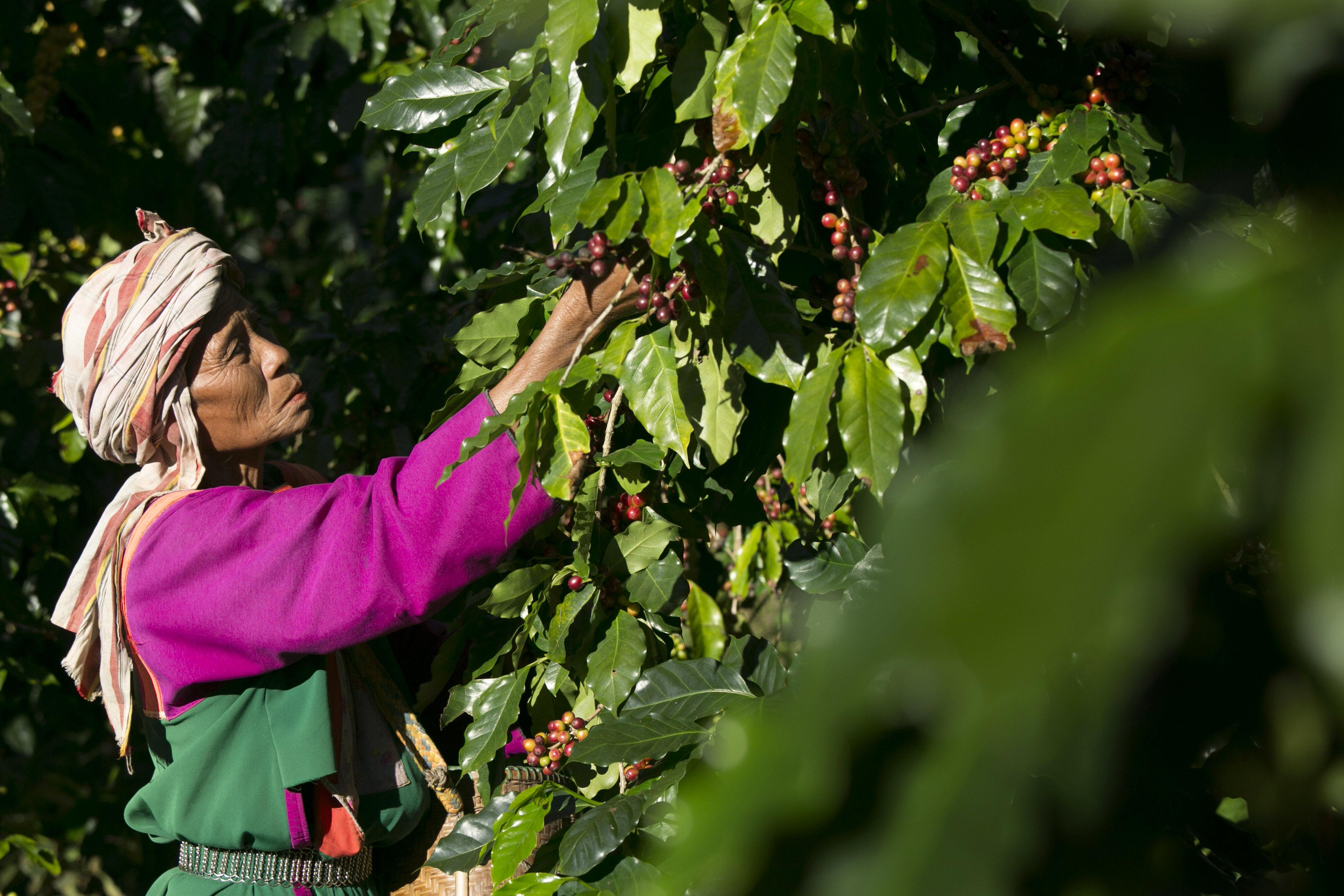 """Warum """"fair trade""""-Kaffee wahre Genießer braucht"""