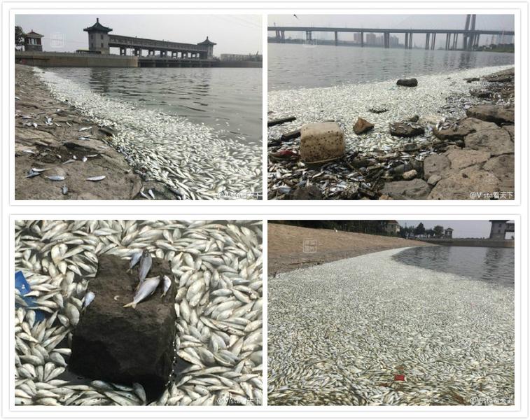 Massen-Tod der Fische in Tianjin: Lügen helfen nicht mehr!