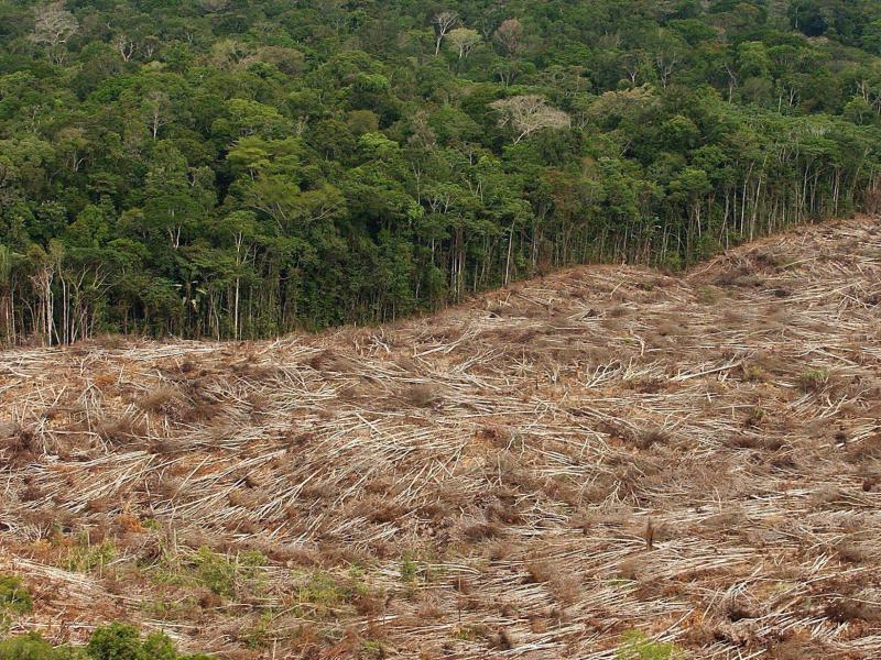 Sojaindustrie: Tausende Hektar Urwald werden für deutsches Fleisch gerodet – und massiver Einsatz von Glyphosat
