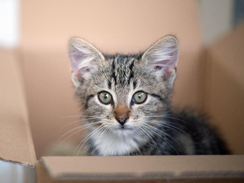 Wettlauf gegen die Zeit – Kätzchens Hilferufe dringen aus einer Wand