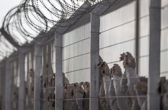 Israel baut Zäune und Mauern gegen illegale Einwanderer Foto: JACK GUEZ/Getty Images
