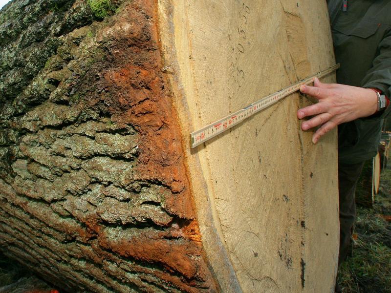 Baumring-Atlas dokumentiert Extremwetter der Alten Welt