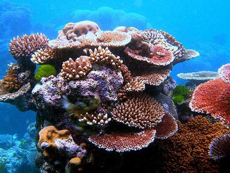 Great-Barrier-Riff ca. 30% geschrumpft – massenhaftes Korallensterben vor Australiens Küste