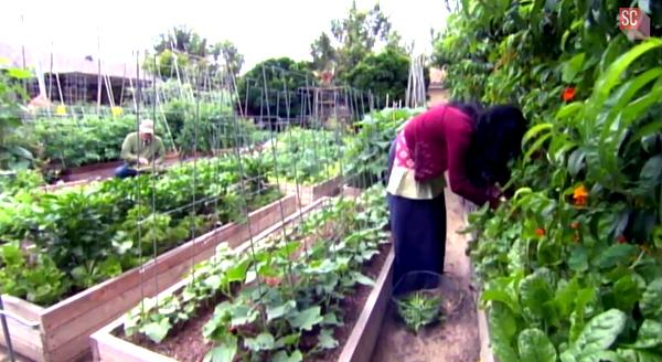 Die Familie Dervaes liebt ihren selbstversorgerischen Lebensstil und könnte sich nichts anderes vorstellen