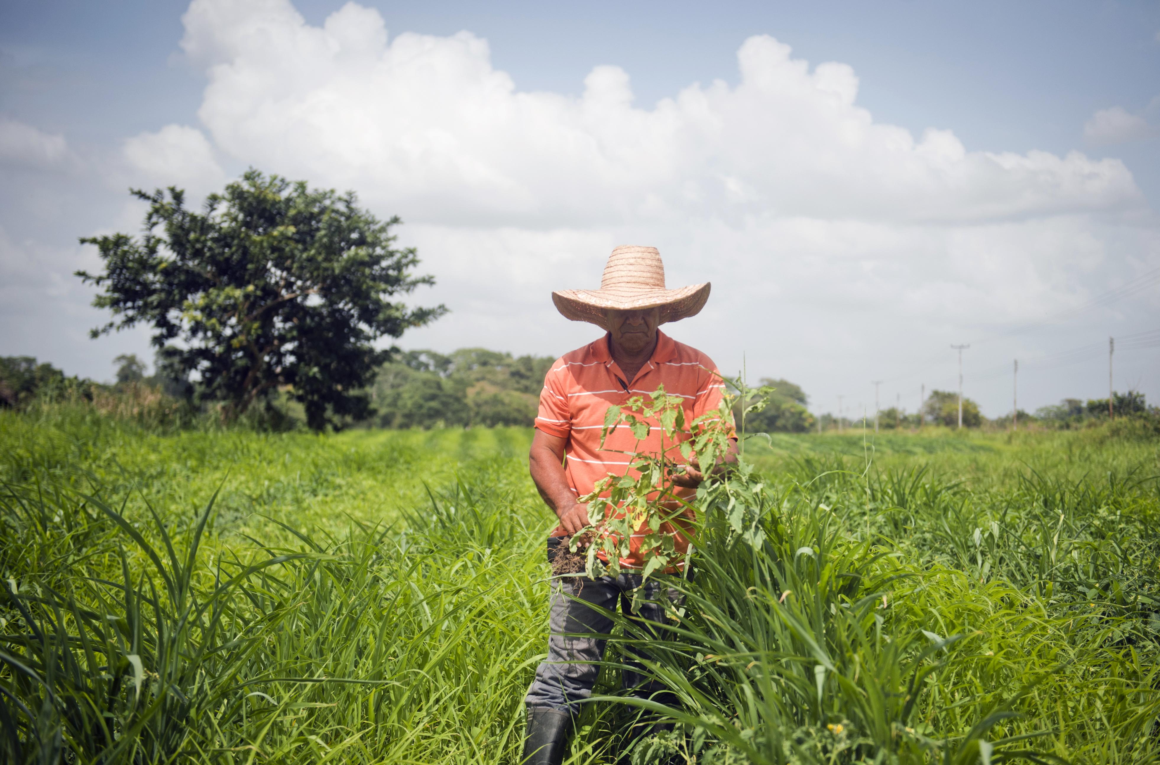 Venezuela verbietet endgültig genetisch verändertes Saatgut – Monsantos GMO's müssen aus Venezuela weichen!