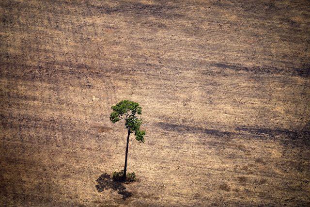 Abholzung des Regenwaldes für Gen-Sojaanbau schreitet in erschreckendem Ausmaß voran Foto: RAPHAEL ALVES/AFP/Getty Images