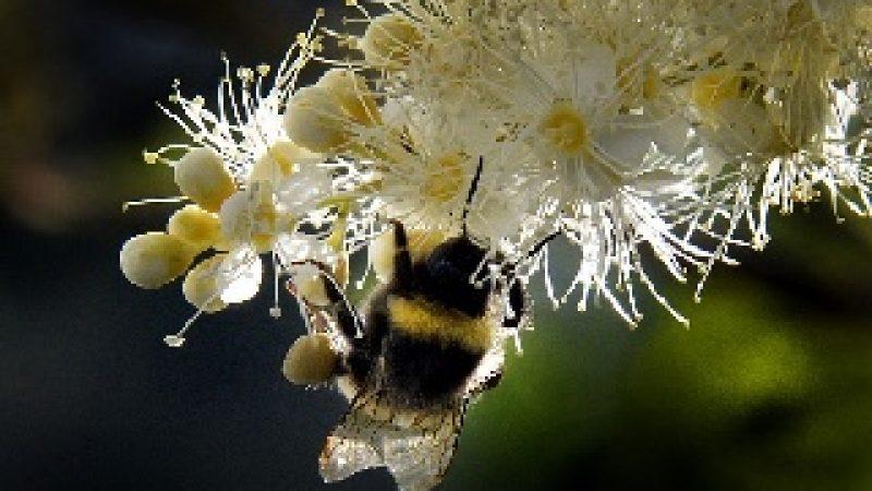 Honig Antibiotika