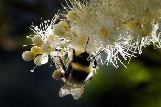 Honig wirkt wo Antibiotika versagen – auch bei multiresistenten Keimen