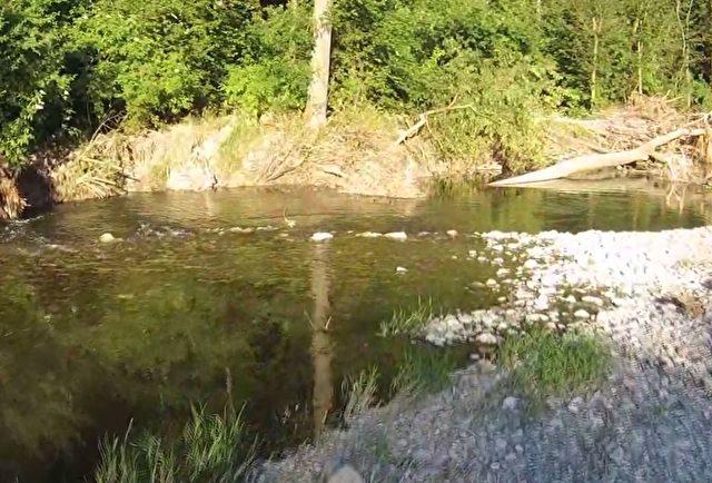 Die Schwechatau ist bei Tierhaltern sehr beliebt Foto: Screenshot/Youtube