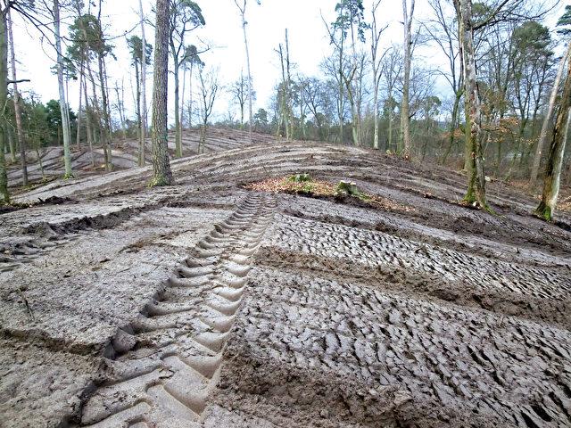 Hessisches Ried: Vor einer Neupflanzung kahlschlagartiger Eingriff, Boden zerstört