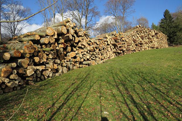 Pähler Schlucht: Holz – ein wertvoller Rohstoff Foto: BUND paehler Schlucht 2 Helmut Hermann