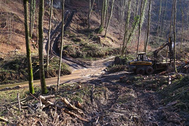 Naturschutzgebiet Pähler Schlucht: Massive Zerstörungen, starkes Ausholzen, kubikmeterweise Schlamm in den Burgleitenbach