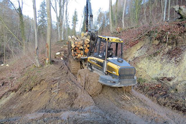 Rücksichtslose Holzernte mit schwerem Gerät im Schluchtwald