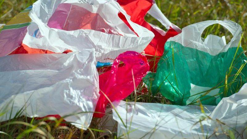 Wachsmotte Plastik