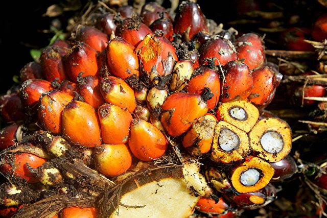 regenwald killer palm l so vermeidet man es in supermarktprodukten. Black Bedroom Furniture Sets. Home Design Ideas