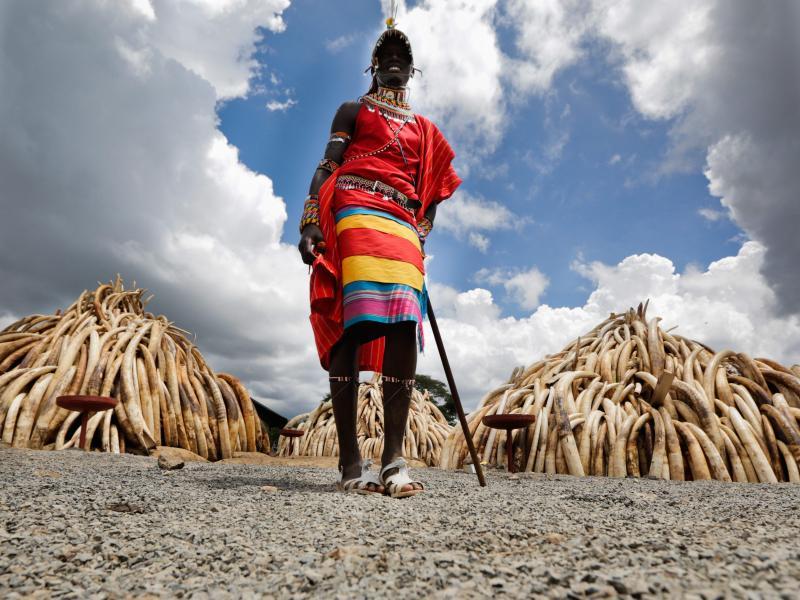 Kenia verbrennt über 100 Tonnen Elfenbein