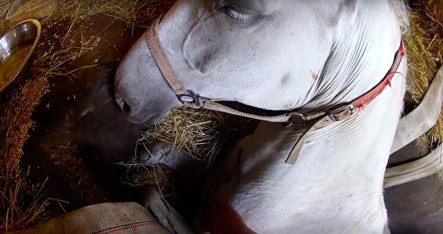 Besitzer und Pferd sind mit ihrem Latein am Ende, doch Marek gibt die Hoffnung nicht auf.