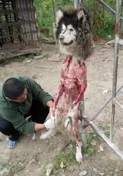 Chinese Man Eating Dog