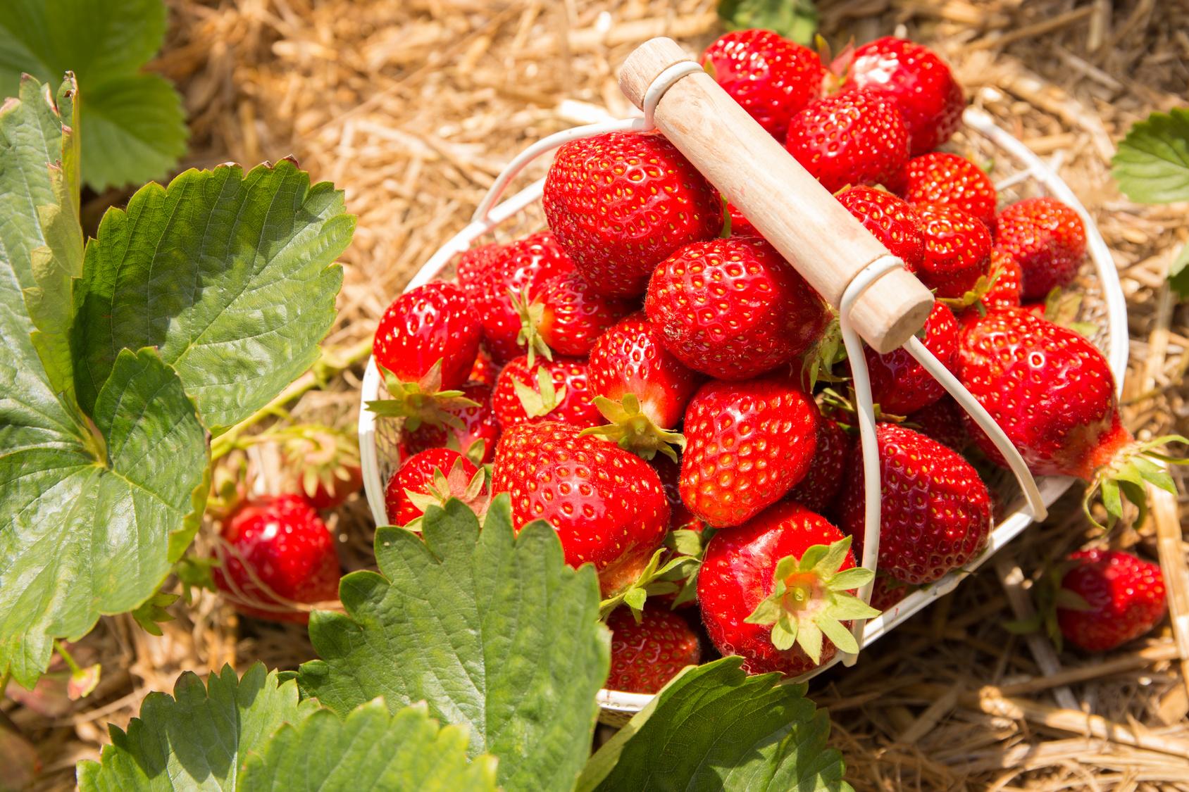 Krebskranke Kinder sollten frisches Obst essen können, drängen Forscher – sterile Kochkost senkt die Lebensqualität