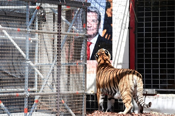 Tiger-Aktion vor dem Theater in Berlin. Foto: JOHN MACDOUGALL/Getty Images