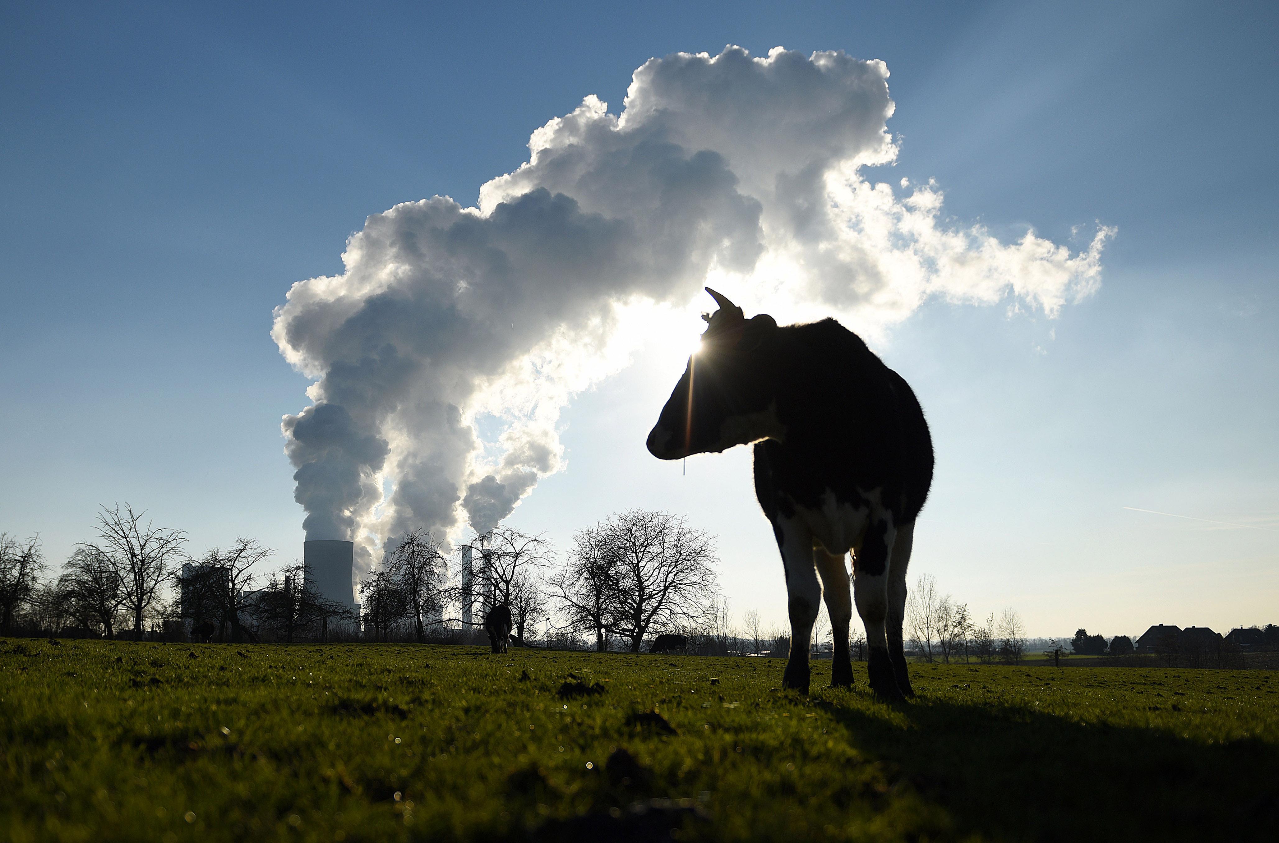 Die Nachhaltigkeitsbewegung: Was hinter den Kulissen nobler Absichten steht