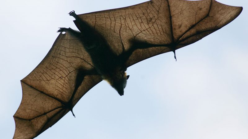Batnight Wird 20 Am Wochenende Wieder Fledermäuse Aus Nächster