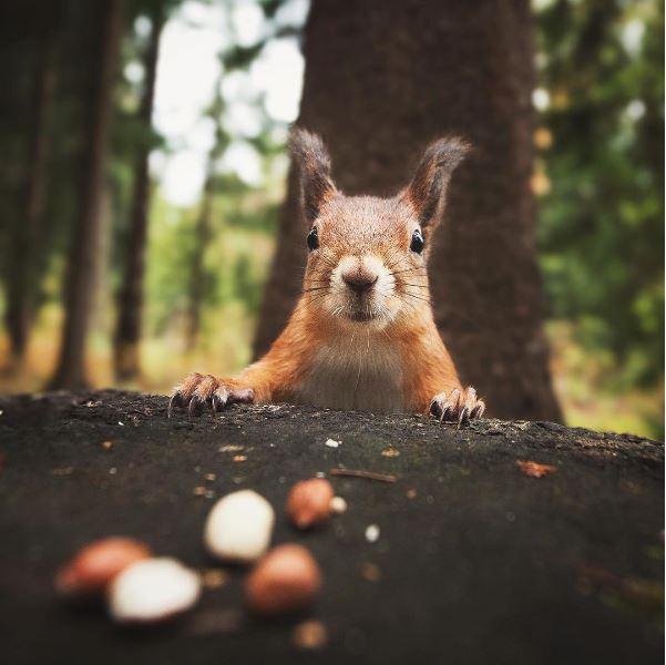 Eichhörnchen-Flüsterer