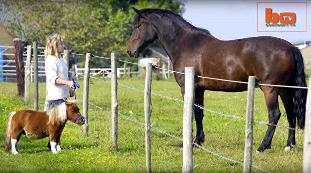 Pferd_a