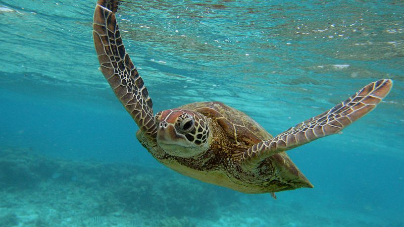 Australien Schildkröten