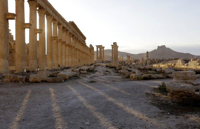 Palmyra, Syrien. 6. May 2016. Foto: LOUAI BESHARA/AFP/Getty Images