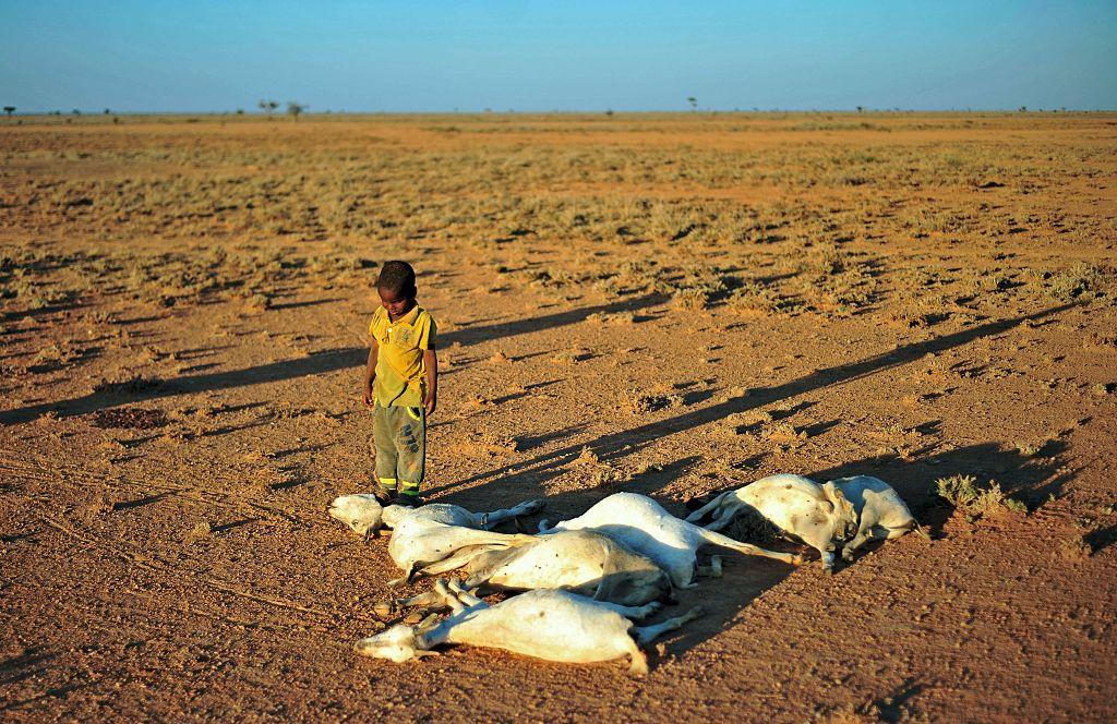 """Somalischer Präsident erklärt Dürre zu """"nationaler Katastrophe"""" und bittet die Welt dringend um Hilfe"""