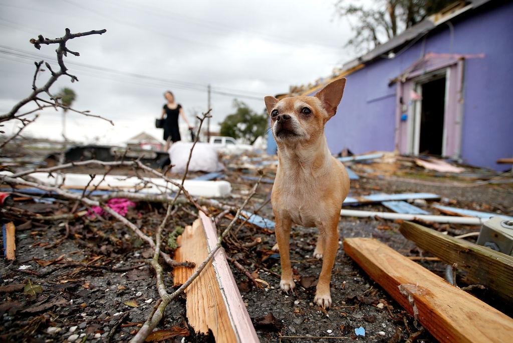 New Orleans: Tornado hinterlässt Zerstörungen und Verletzte