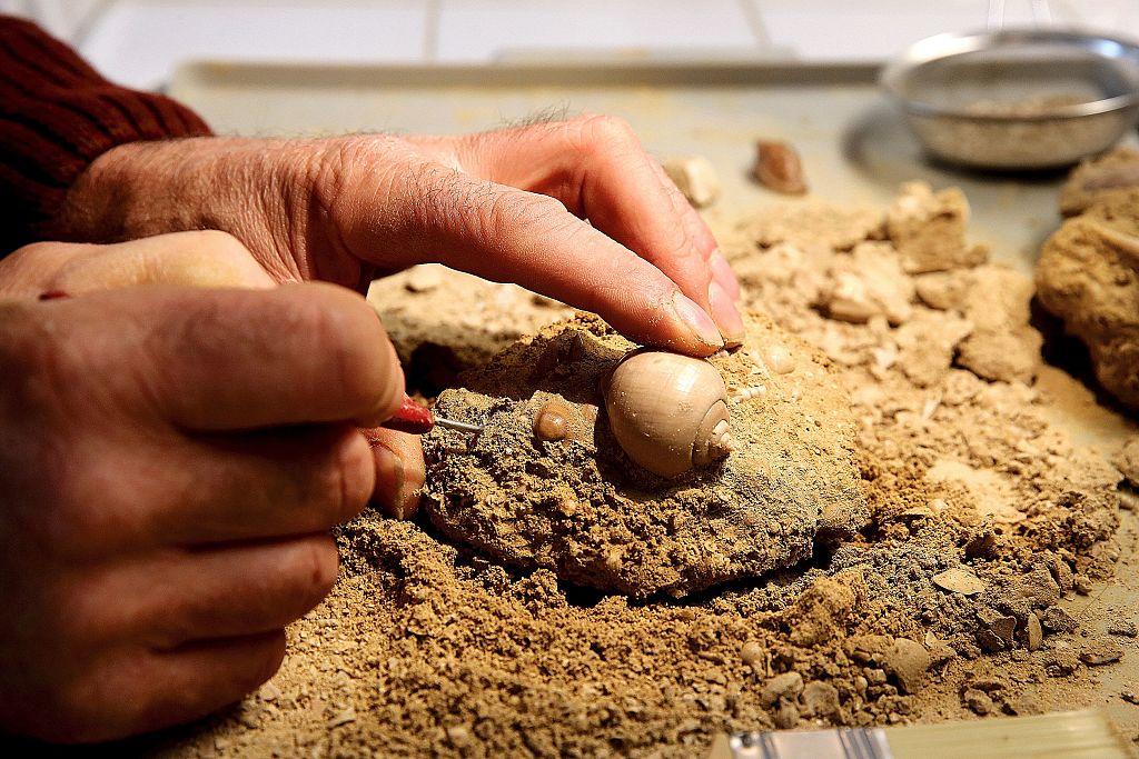 Forscher berichten vom Fund des ältesten bekannten Pflanzenfossils