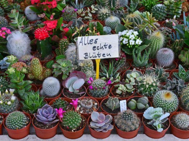 Viel Sonnenschein und milde Temperaturen haben in diesem Frühjahr für gute Geschäfte der Gartenbranche gesorgt. Foto: Martin Schutt/dpa