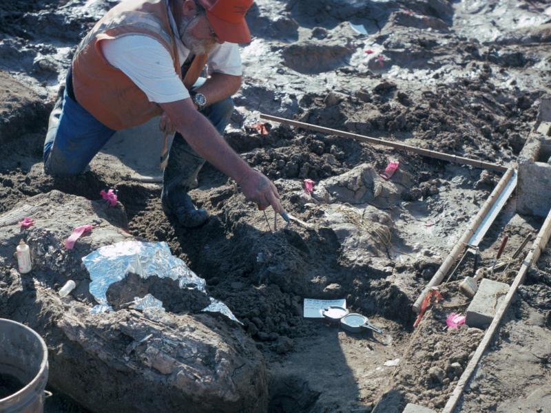 """""""Seltsame Knochen"""" entdeckt – Skelett eines riesigen Tieres ist 20.000 Jahre alt"""