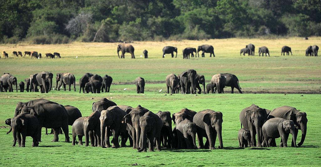 Zum Schutz von Elefanten: Sri Lanka schafft offene Müllkippen ab