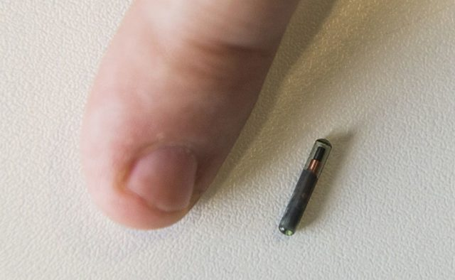 An employee of internet security company Kaspersky Lab shows a microchip for sub-cutaneous implants during a Kaspersky Lab press conference on biological, psychological and technological implications of microchip implants ahead of the opening of the 55th IFA (Internationale Funkausstellung) electronics trade fair in Berlin on September 3, 2015. IFA, Europe's largest consumer electronics and home appliances fair opens from September 4 to September 9, 2015. AFP PHOTO / JOHN MACDOUGALL (Photo credit should read JOHN MACDOUGALL/AFP/Getty Images)