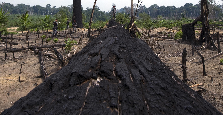 Entwaldung im brasilianischen Amazonasgebiet um 93 Prozent angestiegen